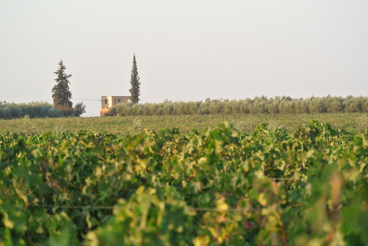 Le mariage de la vigne et de l'olivier