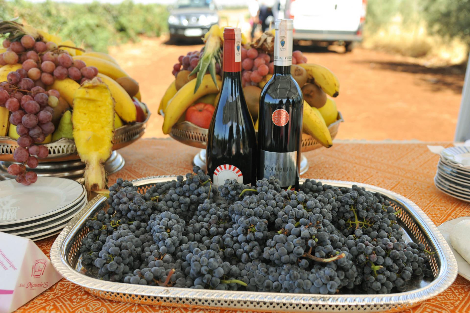 Degustation vin maroc