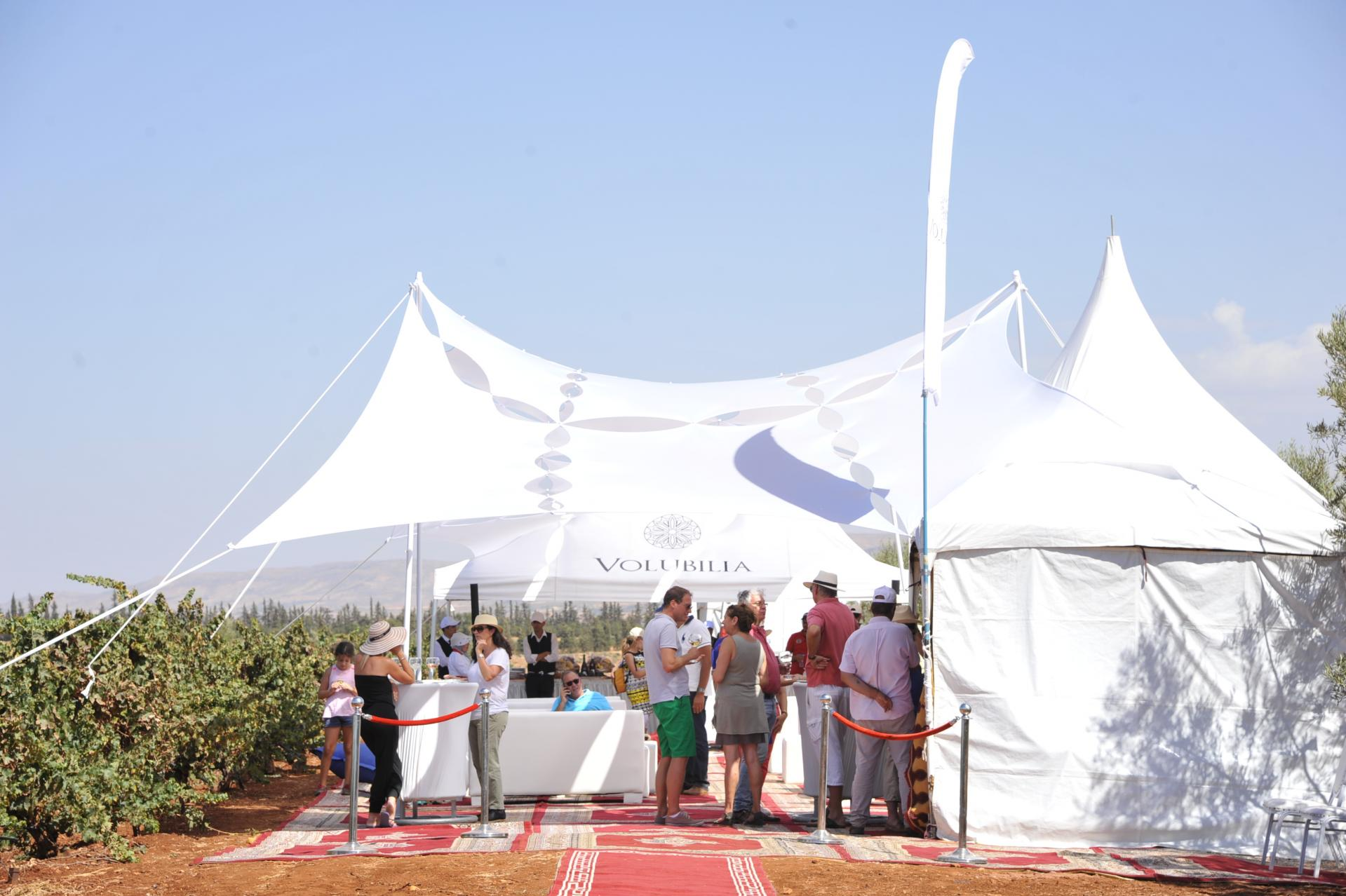 wine tour morocco