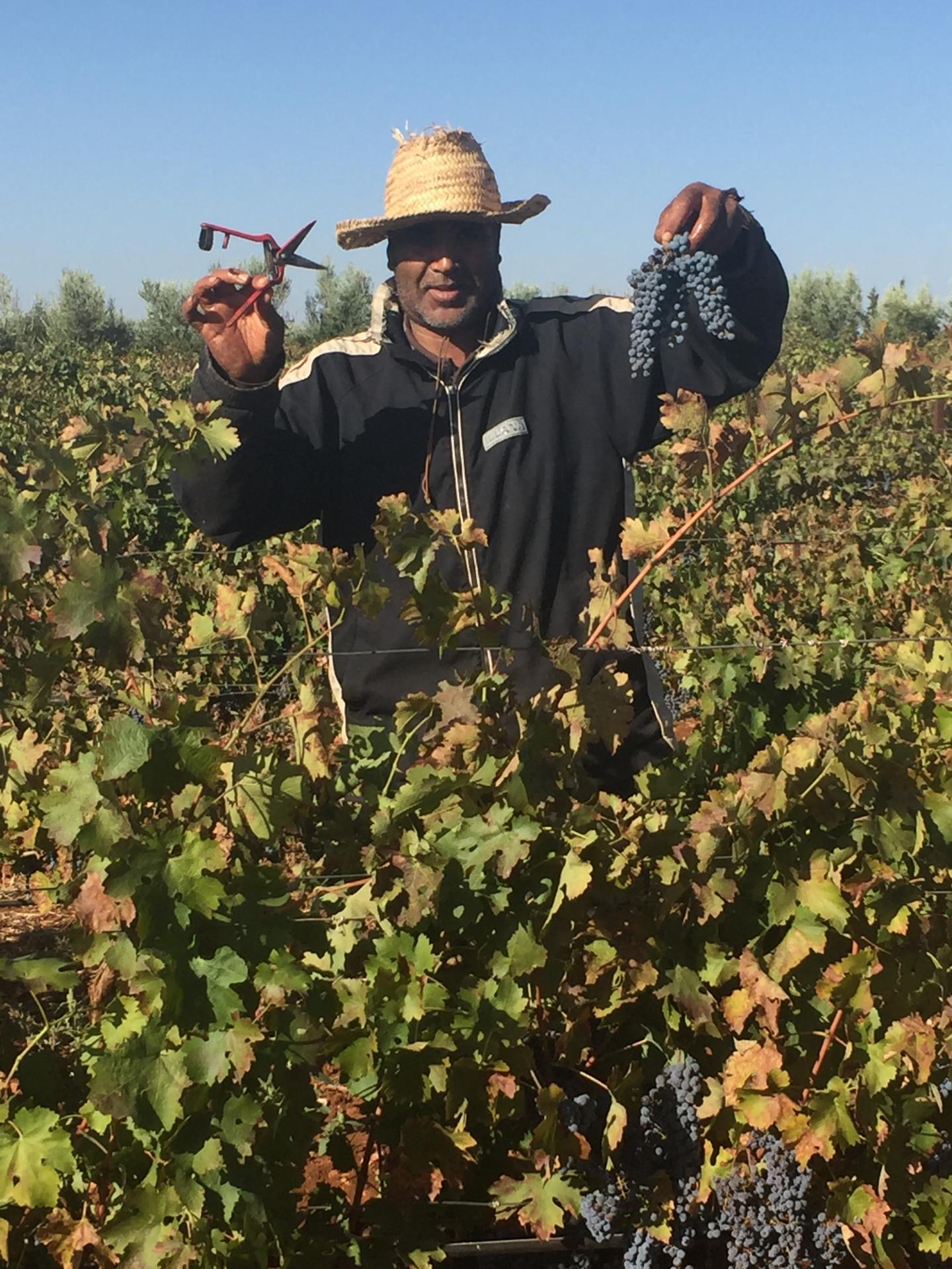The harvest -vintage 2016-
